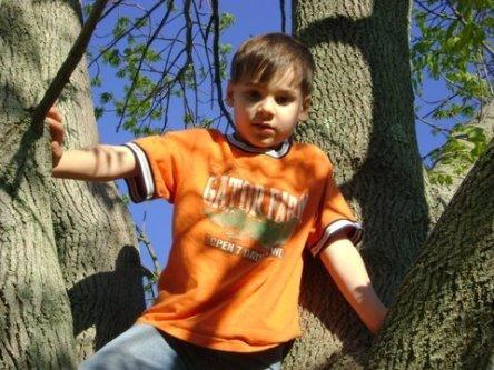 Micah in tree 1
